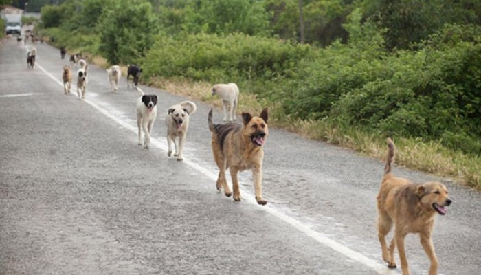 Schema Elettrico Ultrasuoni Per Cani : Dissuasori per cani