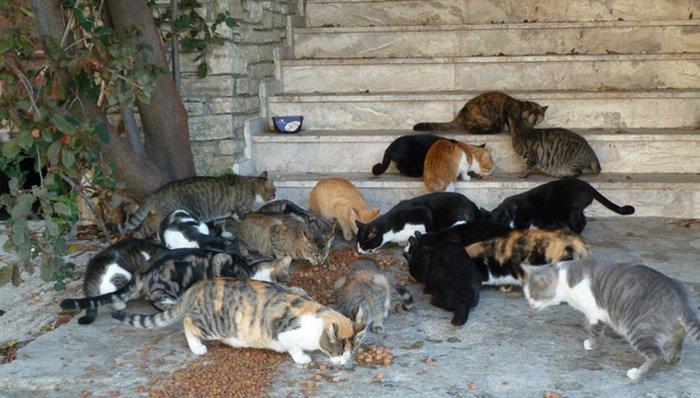 Schema Elettrico Ultrasuoni Per Cani : Dissuasori per gatti