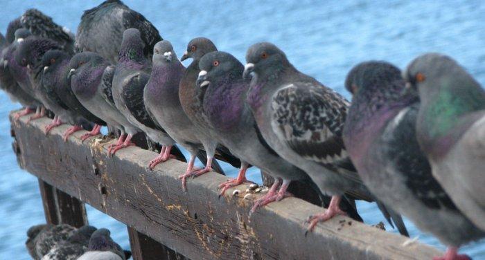Dissuasori per piccioni - Dissuasori