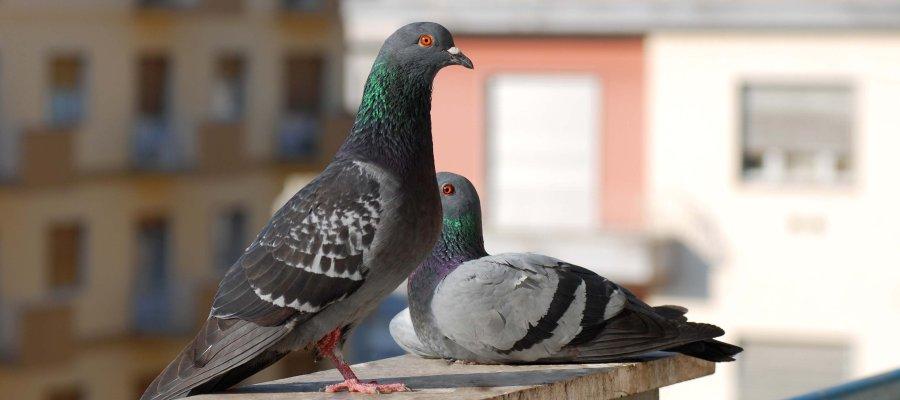 Dissuasori di sosta e parcheggio dissuasori for Dissuasori per piccioni a nastro rifrangente